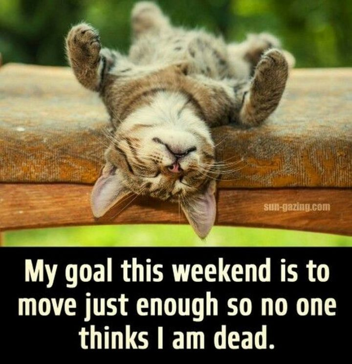 """""""My goal this weekend is to move just enough so no one thinks I am dead."""""""