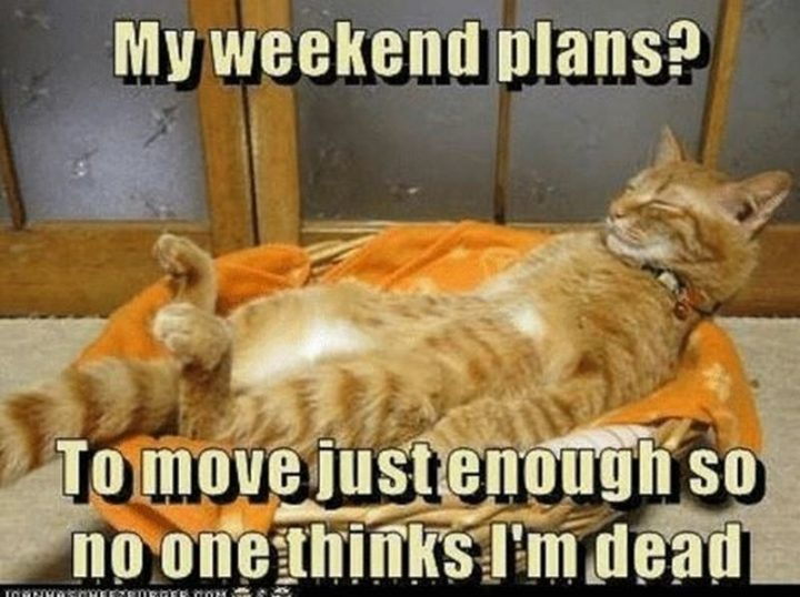 """""""My weekend plans? To move just enough so no one thinks I'm dead."""""""