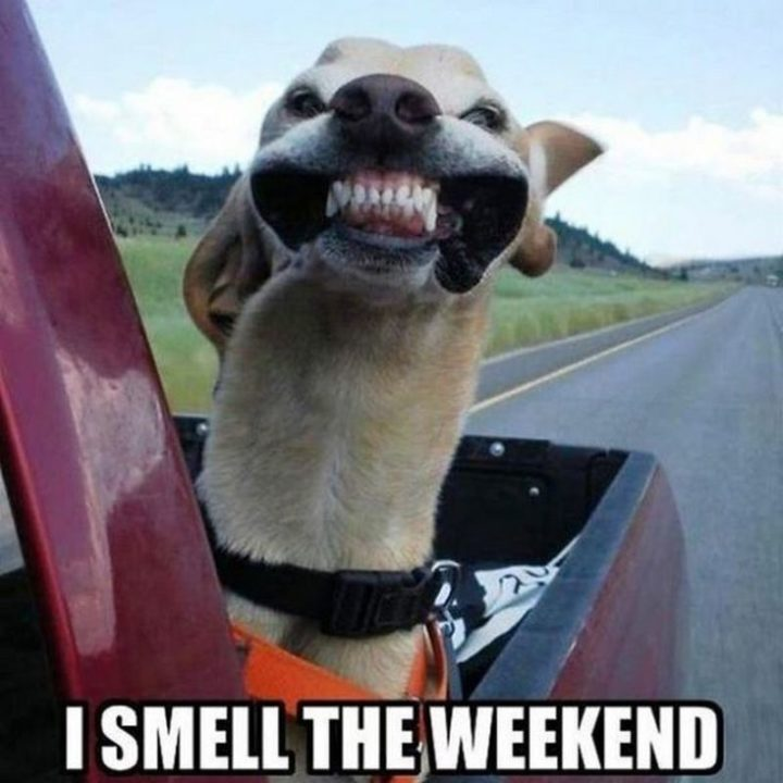 """""""I smell the weekend."""""""