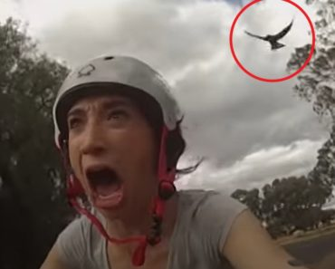 Woman Tries Dodging Magpie Attacks With THIS but Hilariously Fails