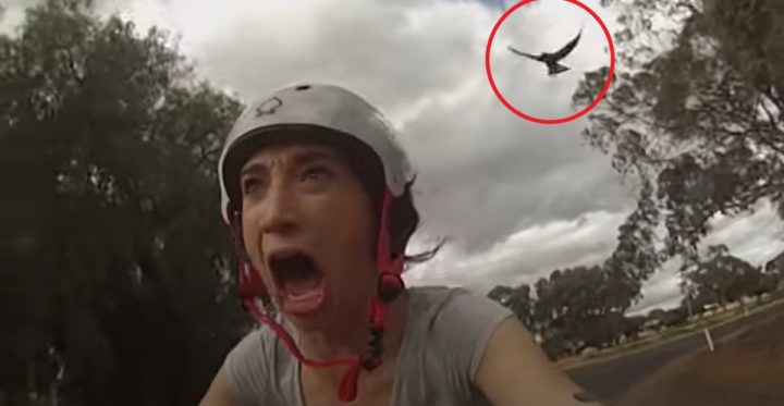 Amber Wheatland Tries Dodging Magpie Attacks With THIS but Hilariously Fails.