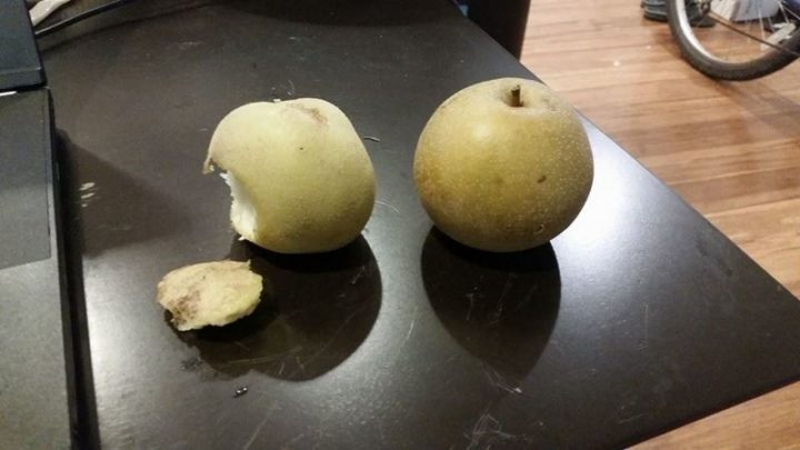 """""""Just accidentally played the worst game ever. I call it Pear or Potato."""""""