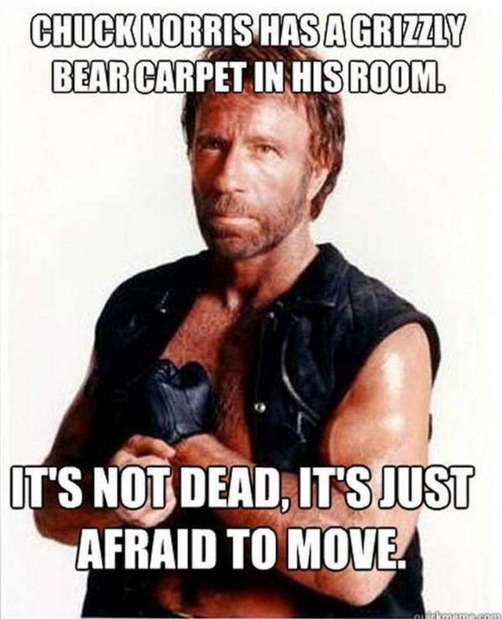 """""""Chuck Norris has a grizzly bear carpet in his room. It's not dead, it's just afraid to move."""""""