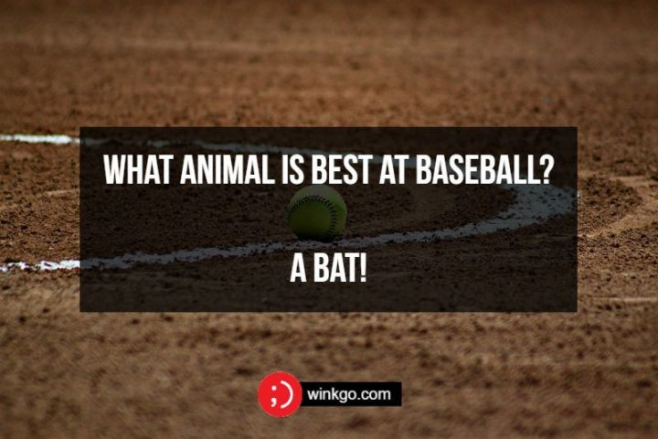71 Two-Line Funny Jokes - What animal is best at baseball? A bat!