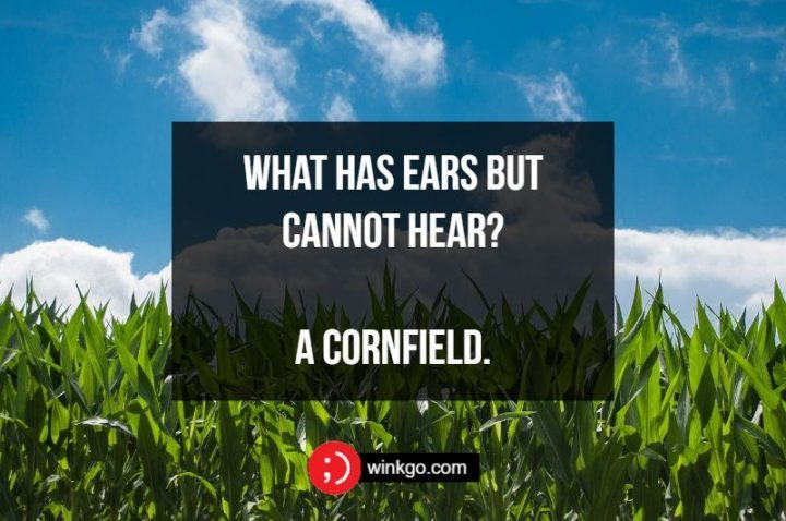 What has ears but cannot hear? A cornfield.