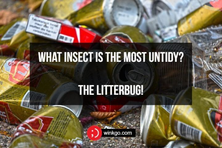 What insect is the most untidy? The litterbug!
