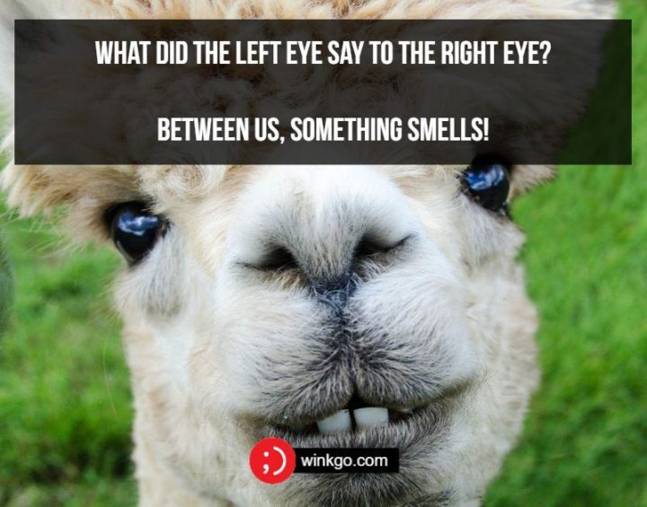 What did the left eye say to the right eye? Between us, something smells!