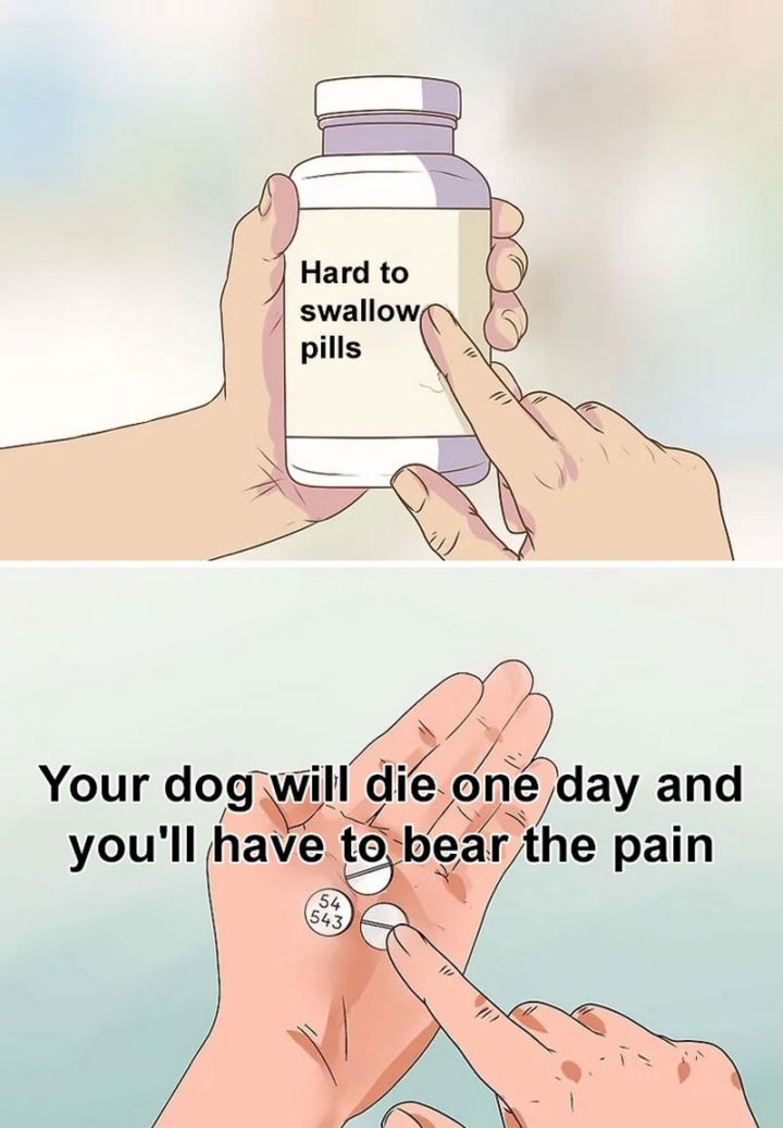 """61 """"Hard to Swallow Pills"""" Memes - """"Your dog will die one day and you'll have to bear the pain."""""""