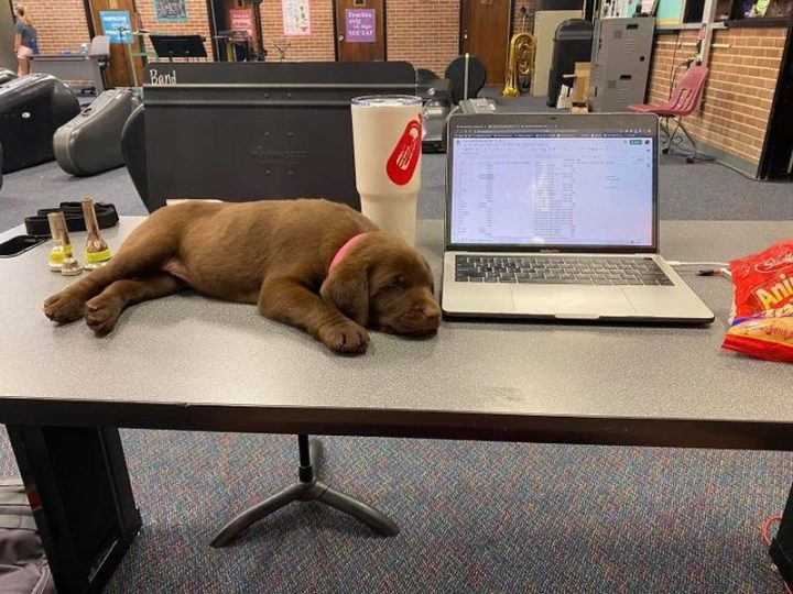 "Dogspotting: ""Coworker left his baked pawtato on my desk."""