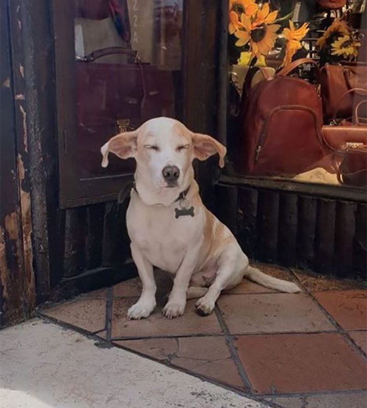"Dogspotting: ""'Dobby' eared boii having a well-deserved snooze on the streets of Rome."""