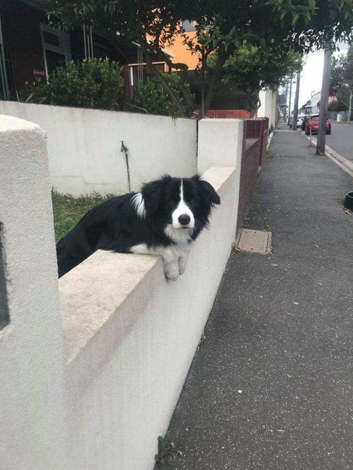 "Dogspotting: ""Good morning m'am."""