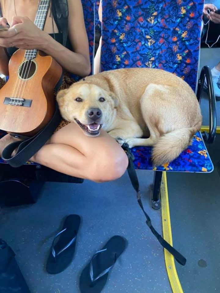"""Spotted this smiling cutie on the bus with his musical owner!"""