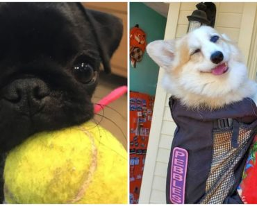 31 People Spotted Random Dogs and Their Reactions Are Priceless