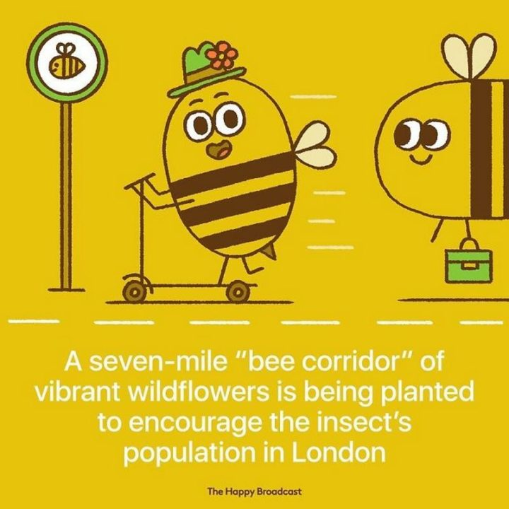 """The Happy Broadcast - """"A seven-mile 'bee corridor' of vibrant wildflowers is being planted to encourage the insect's population in London."""""""