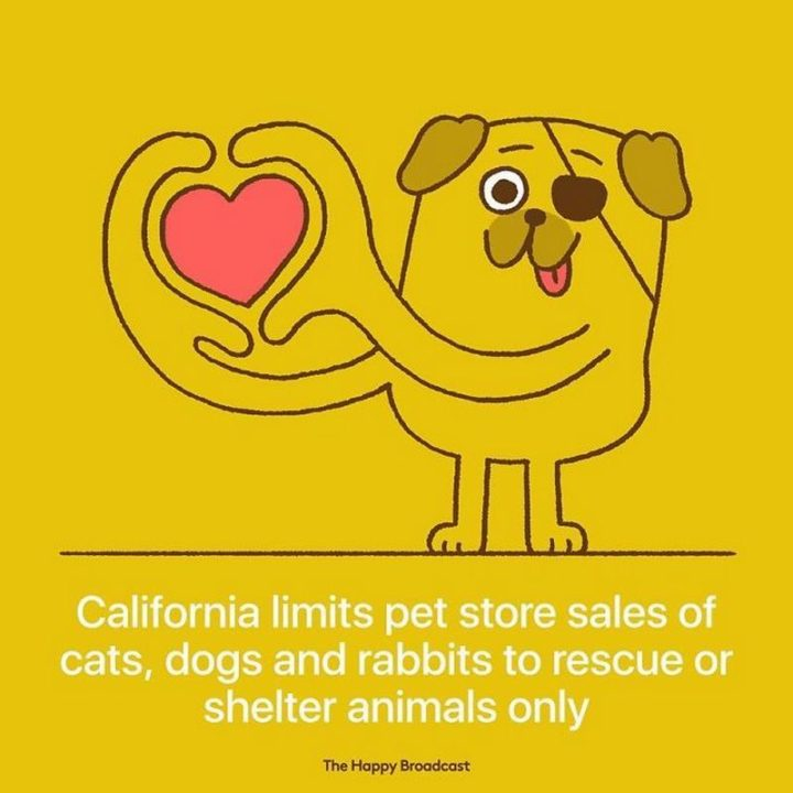 """The Happy Broadcast - """"California limits pet store sales of cats, dogs, and rabbits to rescue or shelter animals only."""""""