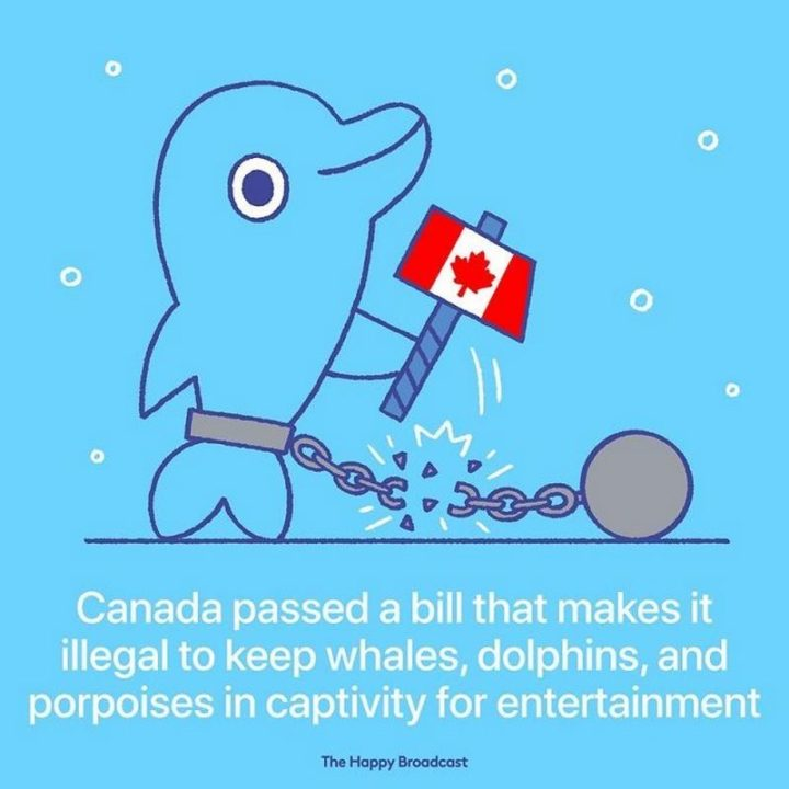 """The Happy Broadcast - """"Canada passed a bill that makes it illegal to keep whales, dolphins, and porpoises in captivity for entertainment."""""""