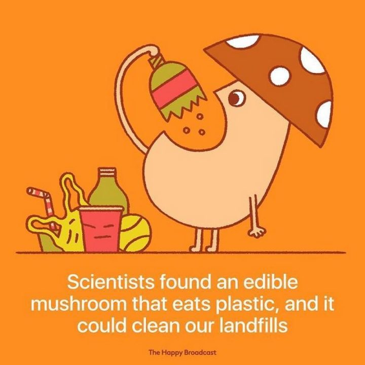 """""""Scientists found an edible mushroom that eats plastic, and it could clean our landfills."""""""