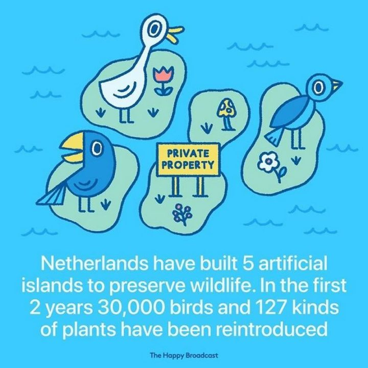 """""""Netherlands have built 5 artificial islands to preserve wildlife. In the first 2 years, 30,000 birds and 127 kinds of plants have been reintroduced."""""""