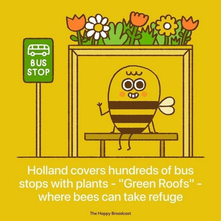 """""""Holland covers hundreds of bus stops with plants - 'Green Roofs' - where bees can take refuge."""""""