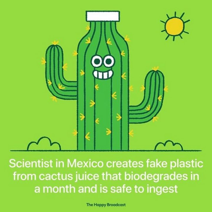 """The Happy Broadcast - """"Scientists in Mexico create fake plastic from cactus juice that biodegrades in a month and is safe to ingest."""""""