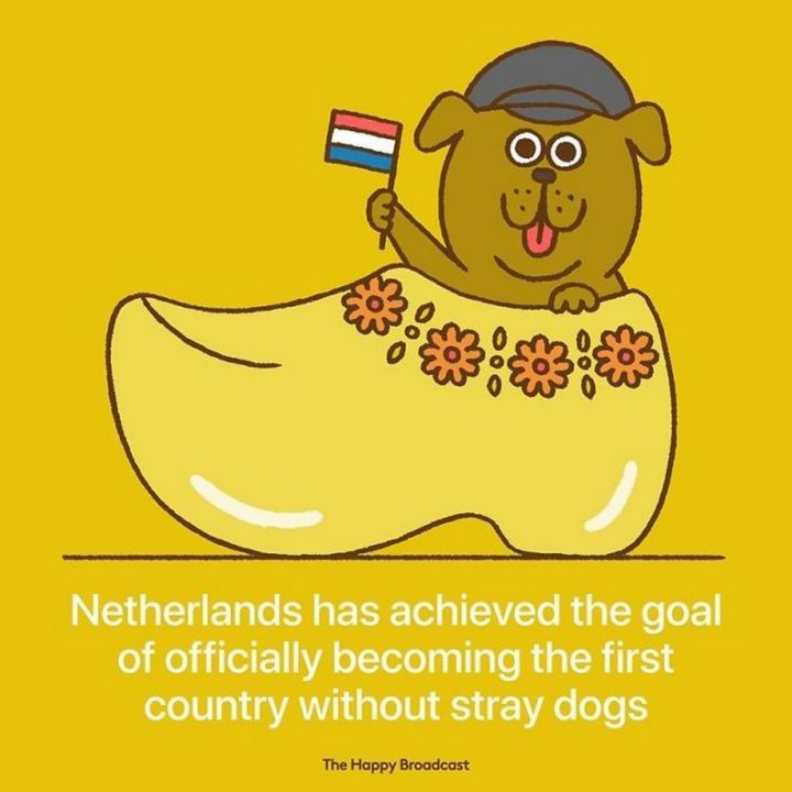 """The Happy Broadcast - """"Netherlands has achieved the goal of officially becoming the first country without stray dogs."""""""