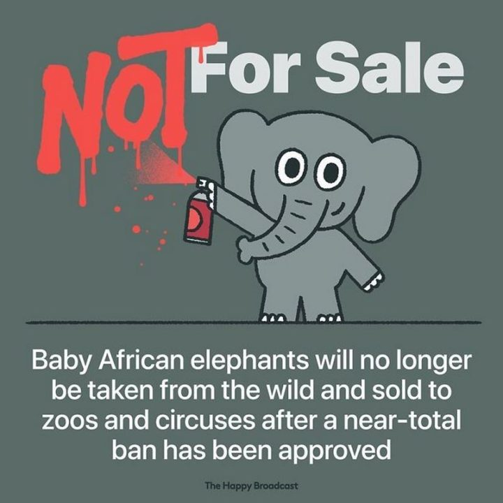"""The Happy Broadcast - """"Baby African elephants will no longer be taken from the wild and sold to zoos and circuses after a near-total ban has been approved."""""""