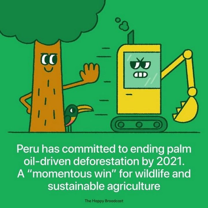"""The Happy Broadcast - """"Peru has committed to ending palm oil-driven deforestation by 2021. A 'momentous win' for wildfire and sustainable agriculture."""""""