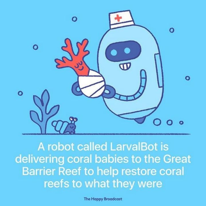 """The Happy Broadcast - """"A robot called LarvalBot is delivering coral babies to the Great Barrier Reef to help restore coral reefs to what they were."""""""