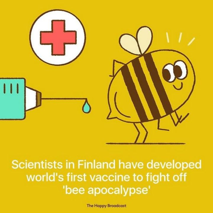 """""""Scientists in Finland have developed the world's first vaccine to fight off 'bee apocalypse'."""""""