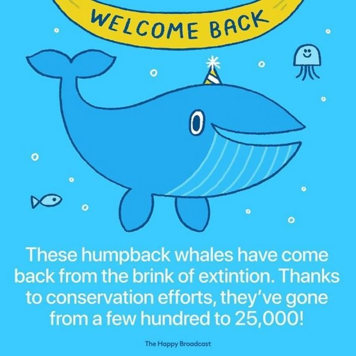 """""""These humpback whales have come back from the brink of extinction. Thanks to conservation efforts, they've gone from a few hundred to 25,000!"""""""