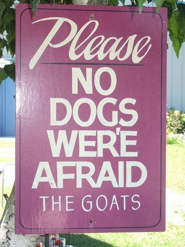 "57 Grammar Memes - ""Please, no dogs wer'e afraid. The goats."""