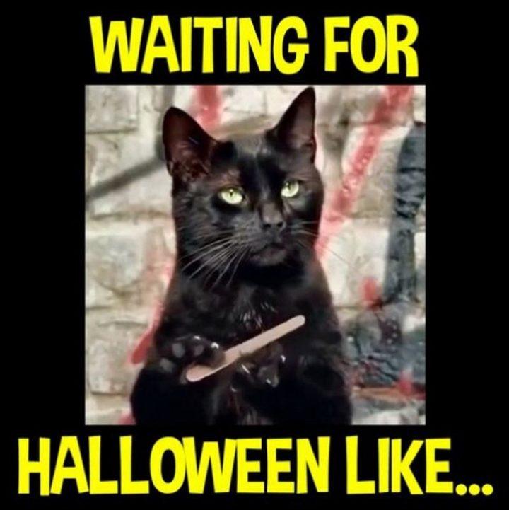 """Waiting for Halloween like..."""