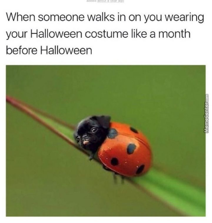 """""""When someone walks in on you wearing your Halloween costume like a month before Halloween."""""""