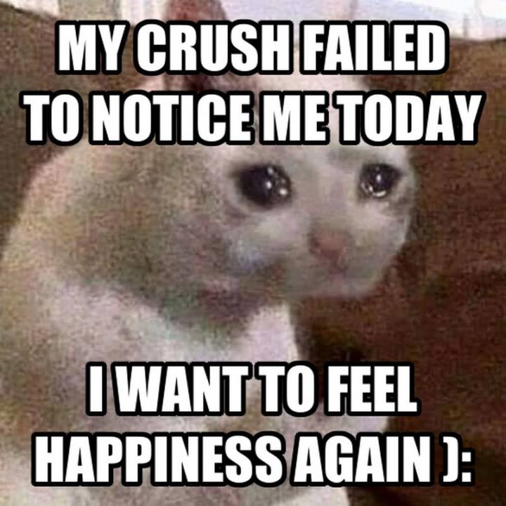 """29 Funny Crying Cat Memes - """"My crush failed to notice me today. I want to feel happiness again."""""""