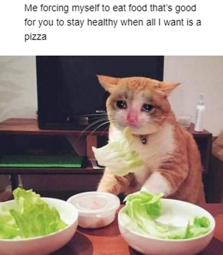 """29 Funny Crying Cat Memes - """"Me forcing myself to eat food that's good for you to stay healthy when all I want is a pizza."""""""