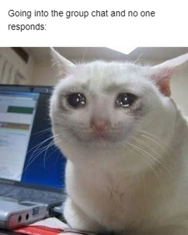 """29 Funny Crying Cat Memes - """"Going into the group chat and no one responds:"""""""