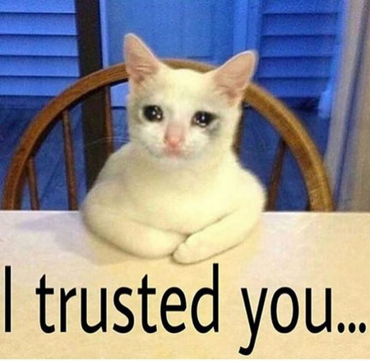 """29 Funny Crying Cat Memes - """"I trusted you."""""""
