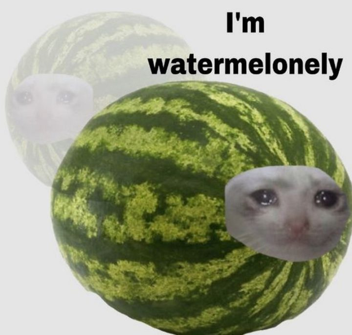"""29 Funny Crying Cat Memes - """"I'm watermelonely."""""""