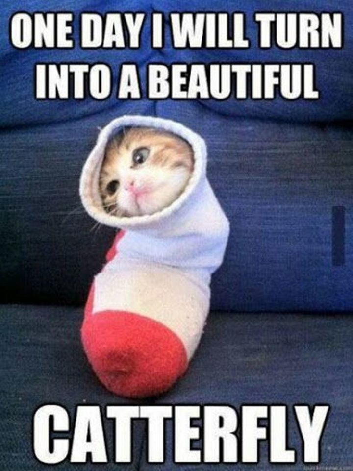 """""""One day I will turn into a beautiful catterfly."""""""