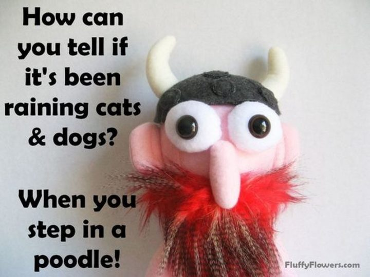 87 Funny Jokes for Kids - How can you tell if it's been raining cats and dogs? When you step in a poodle!
