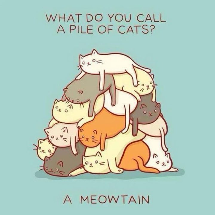 What do you call a pile of cats? A meowtain.