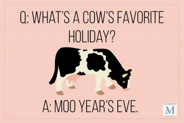 What's a cow's favorite holiday? Moo Year's Eve.
