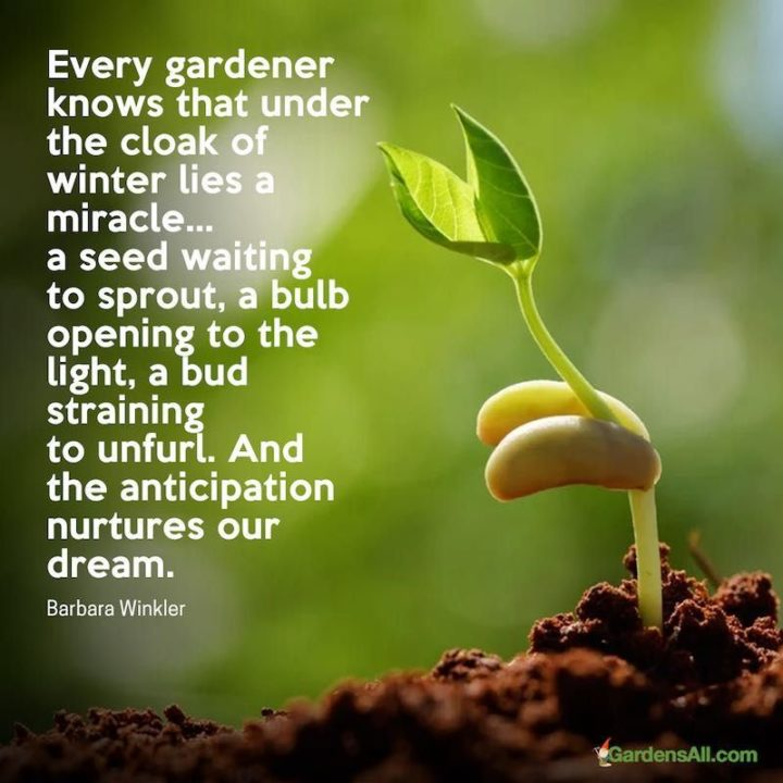 """""""Every gardener knows that under the cloak of winter lies a miracle...a seed waiting to sprout, a bulb opening to the light, a bud straining to unfurl.  And the anticipation nurtures our dream."""" - Barbara Winkler"""