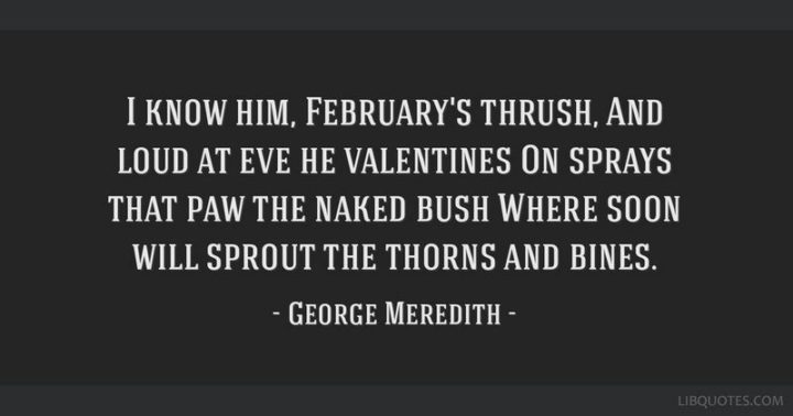 """""""I know him, February's thrush, And loud at eve he valentines On sprays that paw the naked bush Where soon will sprout the thorns and bines."""" - George Meredith"""