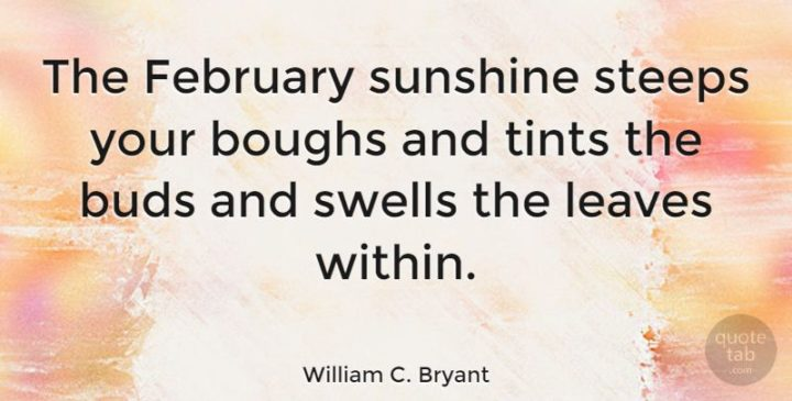 """""""The February sunshine steeps your boughs and tints the buds and swells the leaves within."""" - William C. Bryant"""