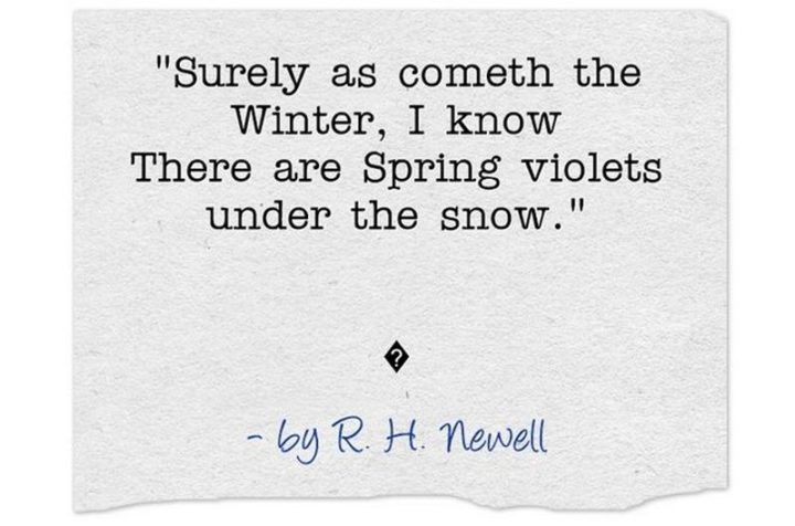 """""""Surely as cometh the Winter, I know There are Spring violets under the snow."""" - R. H. Newell"""