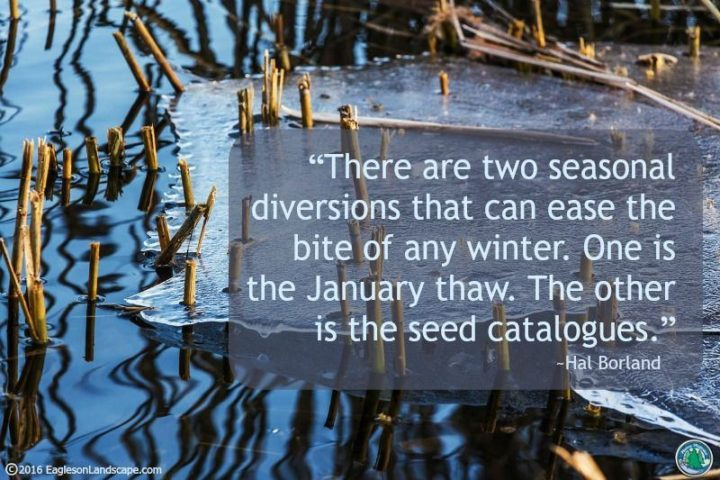 """""""There are two seasonal diversions that can ease the bite of any winter.  One is the January thaw.  The other is the seed catalogues."""" - Hal Borland"""