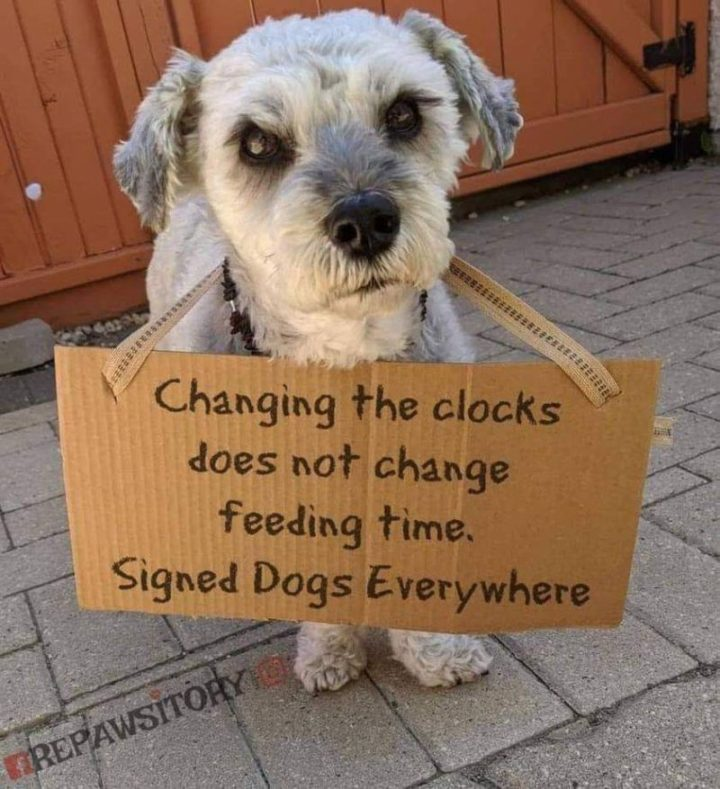 """""""Changing the clocks does not change feeding time. Signed Dogs Everywhere."""""""