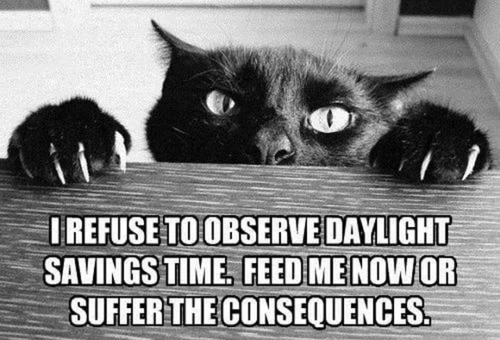"""""""I refuse to observe daylight savings time. Feed me now or suffer the consequences."""""""