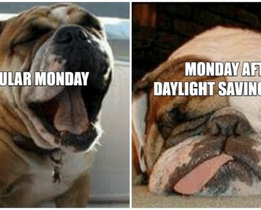 30 Funny Daylight Savings Memes To Spring Forward and Fall Back.